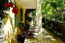 Renoir Süd Terrasse Mimosa